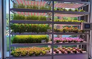 有机蔬菜种植架项目